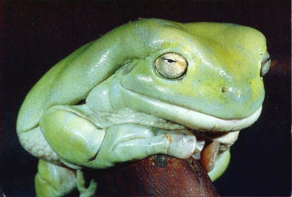 frosker og padder
